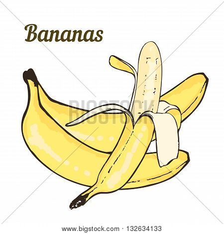 Hand-drawn bananas peeled banana on a white background. Vector.