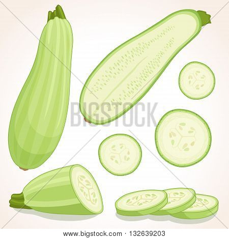 Fresh zucchini isolated on background. Vector illustration. Squash whole half and sliced.