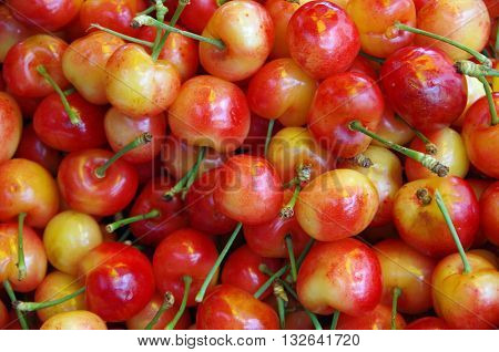 Rainier cherries in colorful pile at market