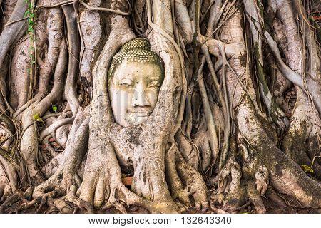 Buddha head in banyan tree roots at Wat Mahathat in Ayutthaya, Thailand.