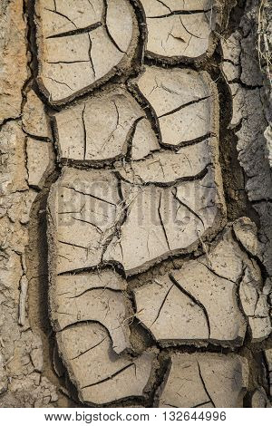 Dry brown earth close up background .