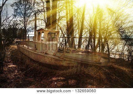 Deserted rusty ship on the coast amongst the trees.