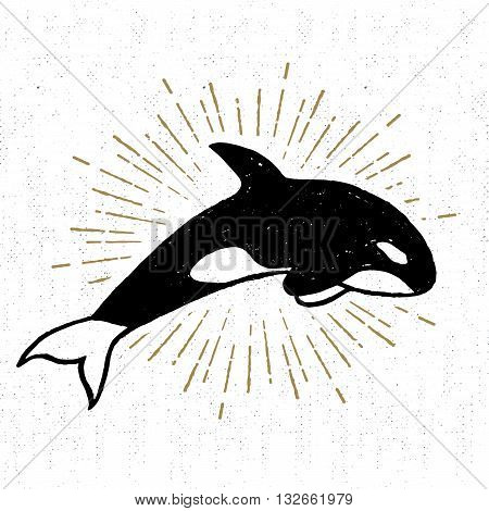 Hand drawn textured icon with killer whale vector illustration.