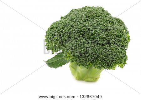 fresh small broccoli on a white background