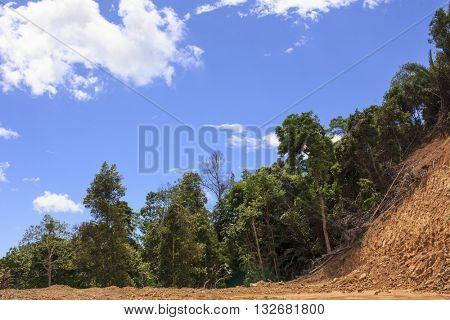 Deforestation environmental destruction. Rainforest destroyed for human development