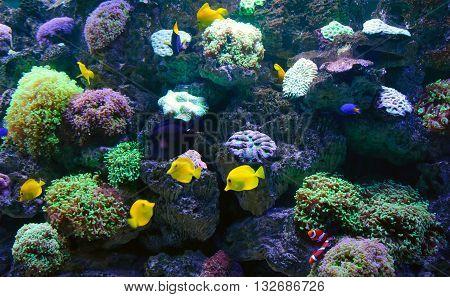 coral reef - underwater world, Aquarium, bright fish