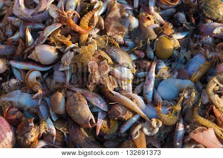 Pile of freshly caught sea fish and seafood