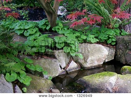 Spring Plants By Pond
