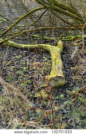 felled mossy tree in the deep forest