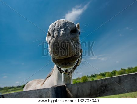 Fisheye of Horse Mouth against blue sky