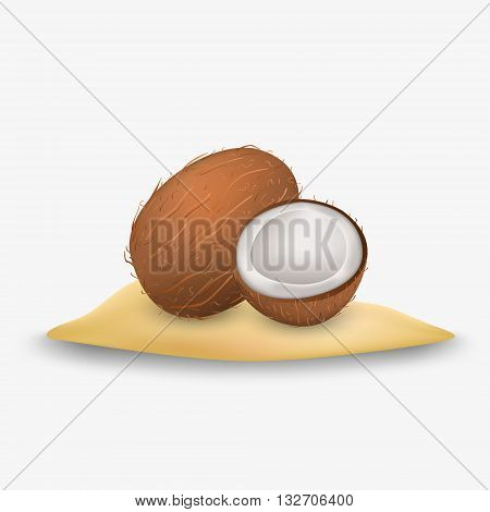 Coconuts icon. Coconut isolated. Coconut vector on white background. Vector icon coconut.