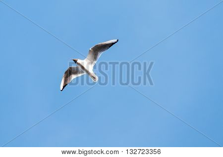 A seagull flying in the beautiful blue sky