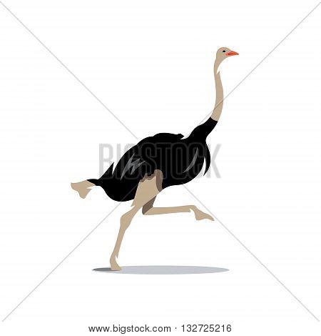 Big Fast Bird runs Isolated on a White Background