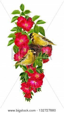 Two little yellow bird. A bird in the nest. The branch of red roses. Floral background. Old style. Isolated.