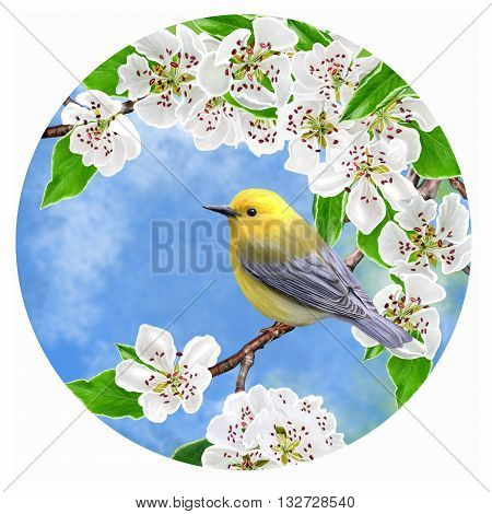 Bright yellow little bird on a branch of a blossoming pear in a circle. Round form. Painting.