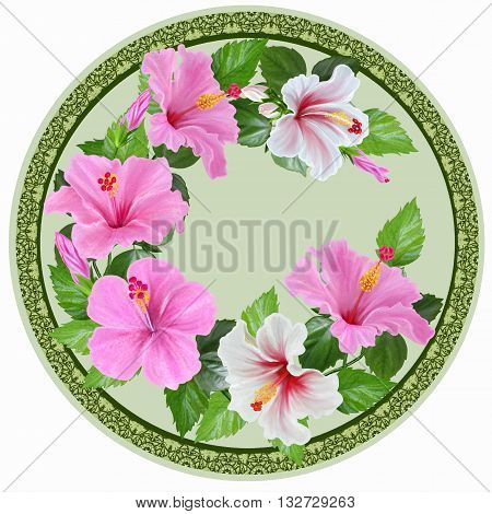 White and pink hibiscus green leaves exotic tropical flowers. Round form circle