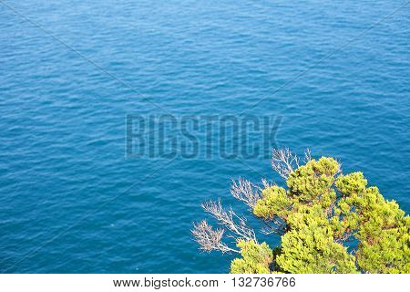 Tree And Ocean