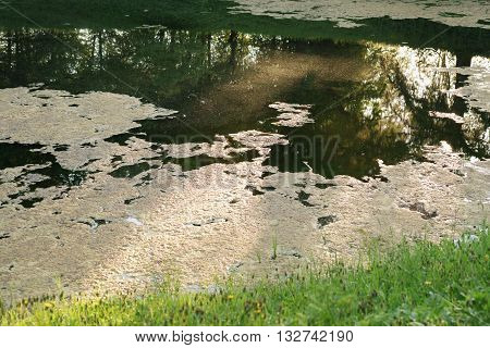 blooming water in late spring, water pollution