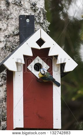 a blue tit delivering food to it´s chicks