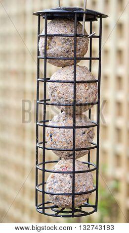 Hanging bird feeder filled with suet balls