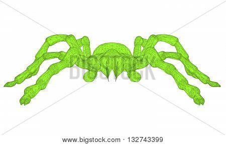 Vector illustration of polygonal tarantula. Isolated. 3D.