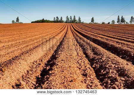 A Prince Edward Island farm field freshly planted with potatoes.