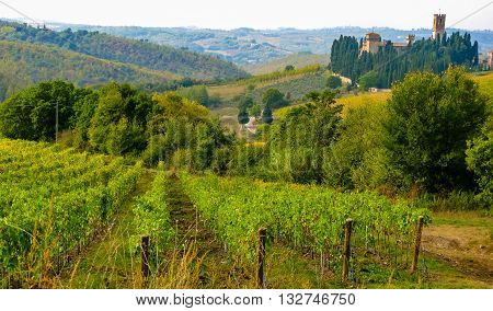 A vineyard in the Tuscan hills. In the background a medieval village