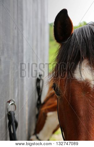 Close up of a beautiful brown horse.