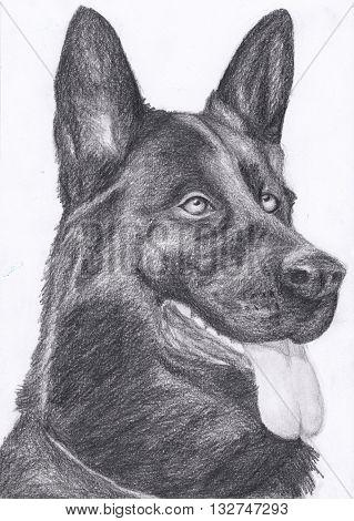 dog portrait German Shepherd hand draw pencil