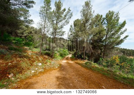 Dirt Road in the Forest of Galilee in Israel