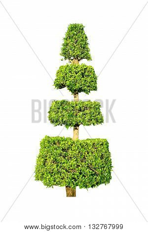 Tree isolated isolated on white color background
