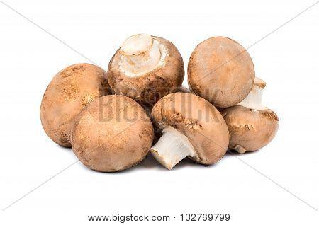 Mushrooms Royal Champignon