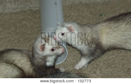 Bandit And Weezil