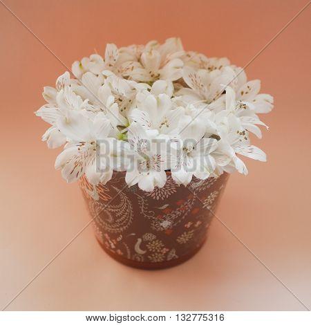 white flowers in brown pot on orange background