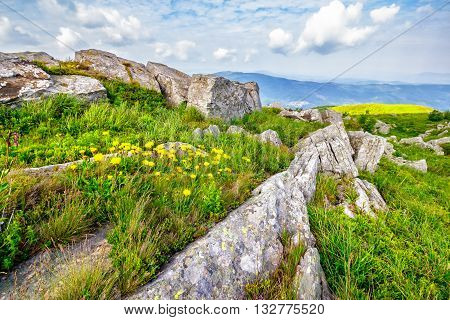 Dandelions Among The Boulders On Hill Side