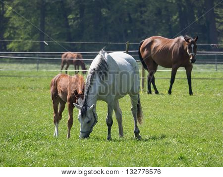 many horses on a Paddock in western germany