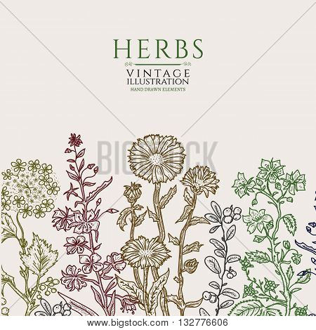 Medical herbs vintage template hand drawn sketch vector illustration
