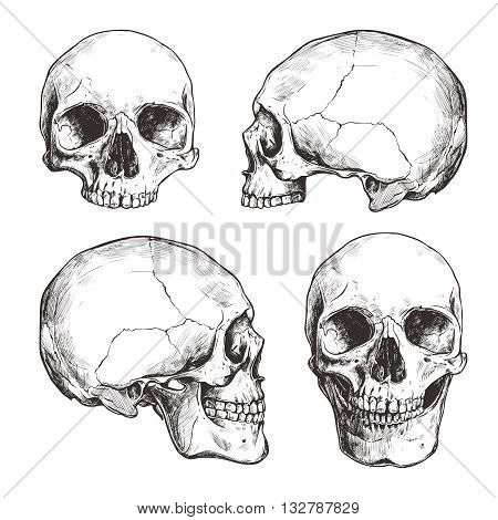Collection Of Hand Drawn Skulls In Monochrome. Vector Skulls Illustrations