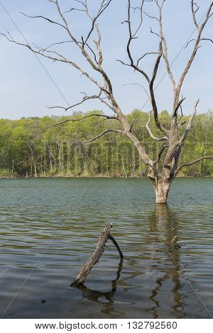 A dead tree in a lake during spring.
