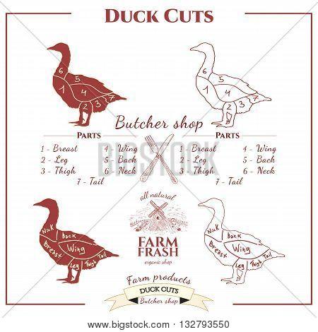 Duck cuts vector set Duck cuts vector