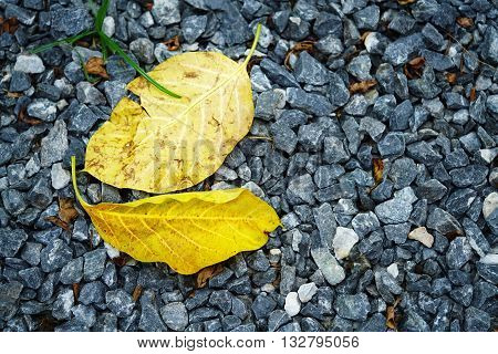 Yellow Leafs on the scree use for background