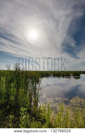 Lake With Reeds Under The Sun