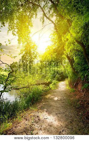 Linden near calm river in sunny morning