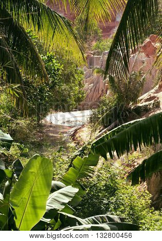 green landscape with palms and white sand rocks, fairy stream vietnam mui ne, asian vacations