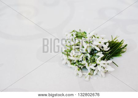 Snowdrop lying flowers at white glossiness background