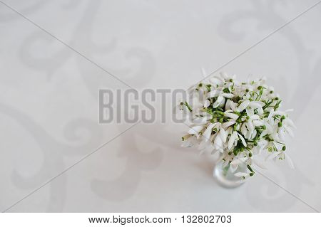 Snowdrop Flowers At Vase On White Glossiness Background With Ornament