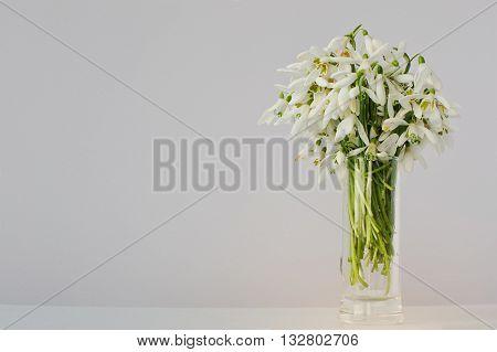 Snowdrop Flowers At Vase On White  Background