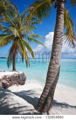 Palms on the shore of Maldivian island with view of the blue ocean