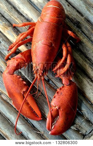 Cooked Lobster: Whole red lobster, ready to eat, shown on a rustic wood background.