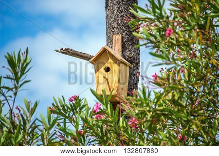 Birdhouse on the pine tree, sunny day.